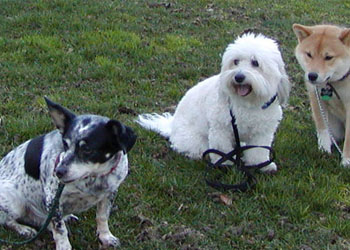 American Dog School | Training & Obedience Classes Fort Collins